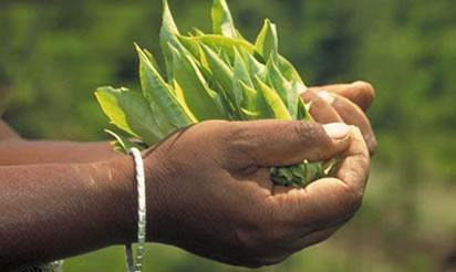 Guter Bio Fairtrade Kaffee und Fairtrade Tee online kaufen